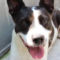 Adopt A Pet :: Gypsy - Wichita, KS