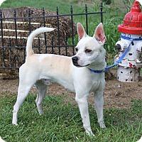Adopt A Pet :: Finn - Marietta, OH