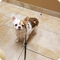 Adopt A Pet :: Webble - Aurora, IL