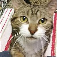 Adopt A Pet :: Samantha - Freeport, NY