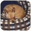 Photo 3 - Chihuahua Dog for adoption in Vista, California - Sergio