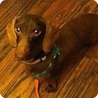 Adopt A Pet :: James - MD - Jacobus, PA