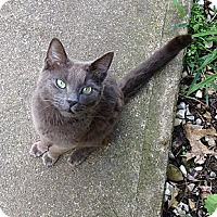 Adopt A Pet :: Stray Cat - Mt Pleasant - Acme, PA