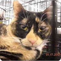 Adopt A Pet :: Sakie - Riverside, RI