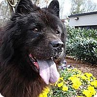 Adopt A Pet :: Skippy - Tucker, GA