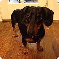 Adopt A Pet :: Connor - Decatur, GA