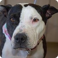 Adopt A Pet :: Hachi - Lucerne Valley, CA