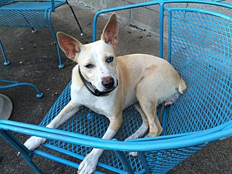 Terrier (Unknown Type, Small) Mix Dog for adoption in Nashville, Tennessee - Honey