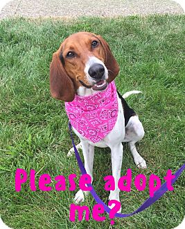 Hound (Unknown Type)/Beagle Mix Dog for adoption in LaGrange, Kentucky - Pepper