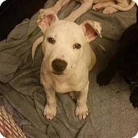 Adopt A Pet :: Melody - Von Ormy, TX