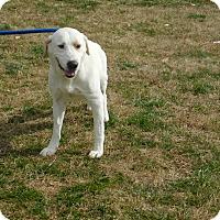 Adopt A Pet :: Winston - Deer Park, NY
