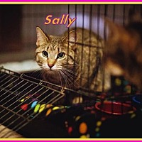 Domestic Shorthair Cat for adoption in Berkeley Springs, West Virginia - Sally