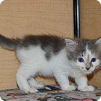 Adopt A Pet :: Gretel - Whittier, CA