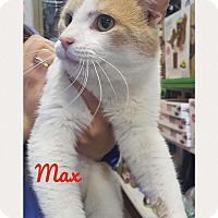 Adopt A Pet :: MAX - THORNHILL, ON