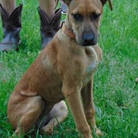 Adopt A Pet :: Bessy - Somers, CT