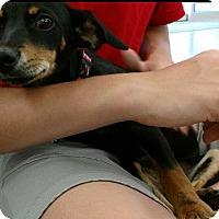 Adopt A Pet :: June - Cat Spring, TX