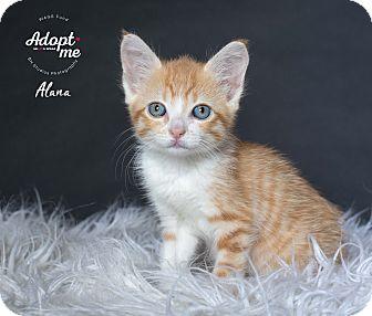 Adopt A Pet :: Alana  - Houston, TX