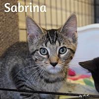 Adopt A Pet :: Sabrina - Ocean City, NJ