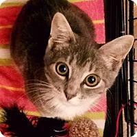 Adopt A Pet :: Stellaluna - Forest Hills, NY