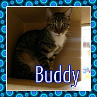 Adopt A Pet :: BUDDY - Lawton, OK