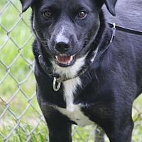 Adopt A Pet :: Eve - Staunton, VA