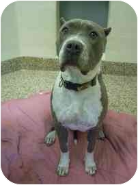 Terrier (Unknown Type, Medium) Mix Dog for adoption in North Charleston, South Carolina - Lady