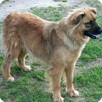 Adopt A Pet :: Maxine - Southampton, PA