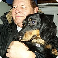 Adopt A Pet :: Henry - West Bloomfield, MI