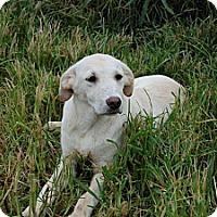 Adopt A Pet :: Blanche - Albany, NY
