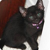 Adopt A Pet :: Sabrina - Santa Rosa, CA