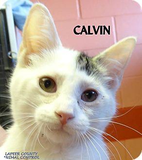 Domestic Shorthair Cat for adoption in Lapeer, Michigan - CALVIN--BABY!!