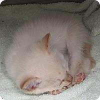 Adopt A Pet :: Alabaster - Athens, GA