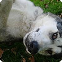 Adopt A Pet :: Lottie - Augusta County, VA