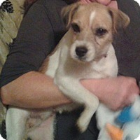 Adopt A Pet :: Dixie In Denton ADOPT PENDING - Dallas/Ft. Worth, TX