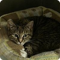 Adopt A Pet :: Jasmine - Byron Center, MI