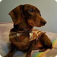 Adopt A Pet :: Koko - Decatur, GA