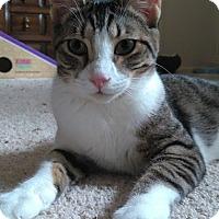 Adopt A Pet :: Alexa - Houston, TX