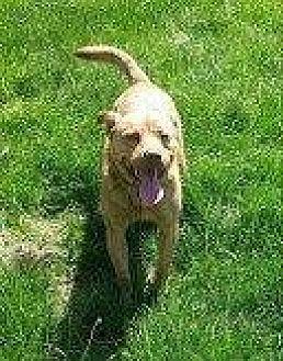 Australian Cattle Dog Mix Dog for adoption in Hampton, Virginia - TURQ