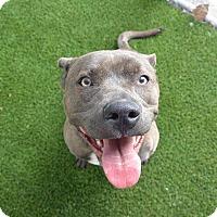 Adopt A Pet :: Vixen - Meridian, ID