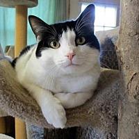 Adopt A Pet :: Marshall - Colonial Beach, VA