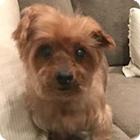 Adopt A Pet :: Charlie - Gainesville, TX