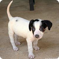 Adopt A Pet :: Boone - Bedford, VA