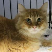 Adopt A Pet :: Buddy - Lafayette, IN