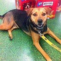 Adopt A Pet :: Bruin - Tampa, FL