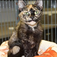 Adopt A Pet :: Carly - Huntley, IL