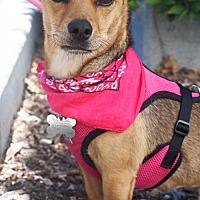 Adopt A Pet :: Mia - Palo Alto, CA