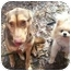 Photo 3 - German Shepherd Dog/Siberian Husky Mix Dog for adoption in Oak Ridge, New Jersey - Harmony