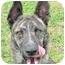 Photo 1 - Shepherd (Unknown Type)/Hound (Unknown Type) Mix Dog for adoption in Cincinnati, Ohio - Brando