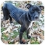 Photo 3 - American Pit Bull Terrier Mix Dog for adoption in Chicago, Illinois - Faith