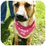 Photo 3 - Shepherd (Unknown Type) Mix Dog for adoption in Detroit, Michigan - Mia-Adopted!